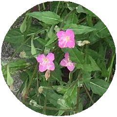 170525_flowers_02_b