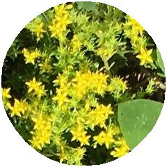 170529_flowers_02_b