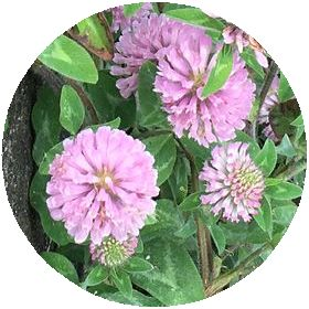 170612_flowers_02_c