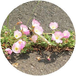 170612_flowers_03_c