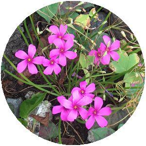 170627_flowers_01
