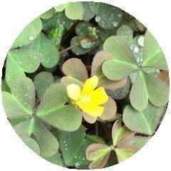 170628_flowers_03_b