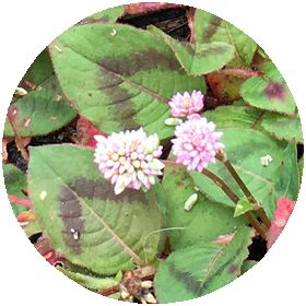 170628_flowers_04_b