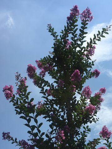 170718_flowers_00