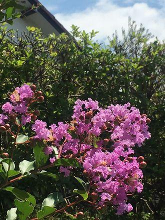 170718_flowers_03