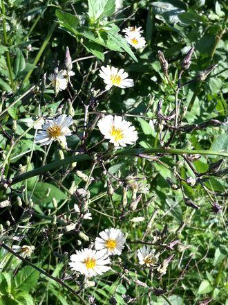 170919_flowers_02_4