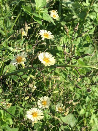 170919_flowers_02_6s