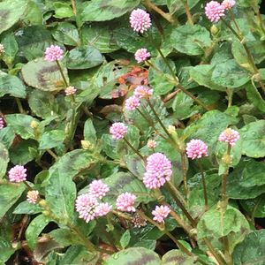 171015_flowers_b