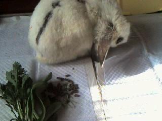 051226 朝 しろちゃんは春菊コマツナが好き
