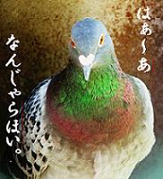 豆鉄砲食った鳩