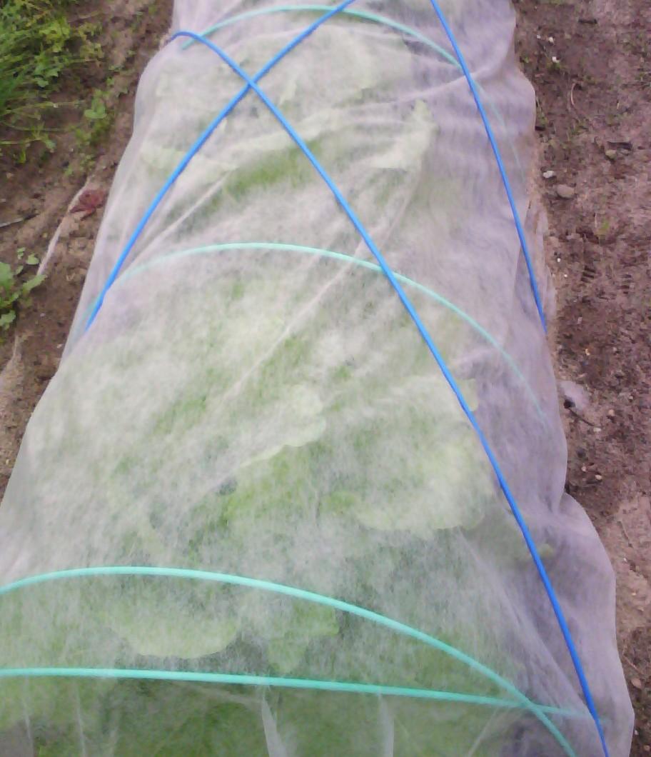 虫除け 朝顔 お酢で家庭菜園の虫除けを作ります!