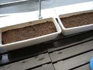 バジルと紫蘇の種を蒔き終えたプランター