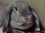 ウサギのポンちゃん