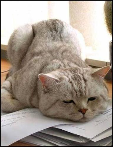 猫画像:眠い | おもしろ動物画像集