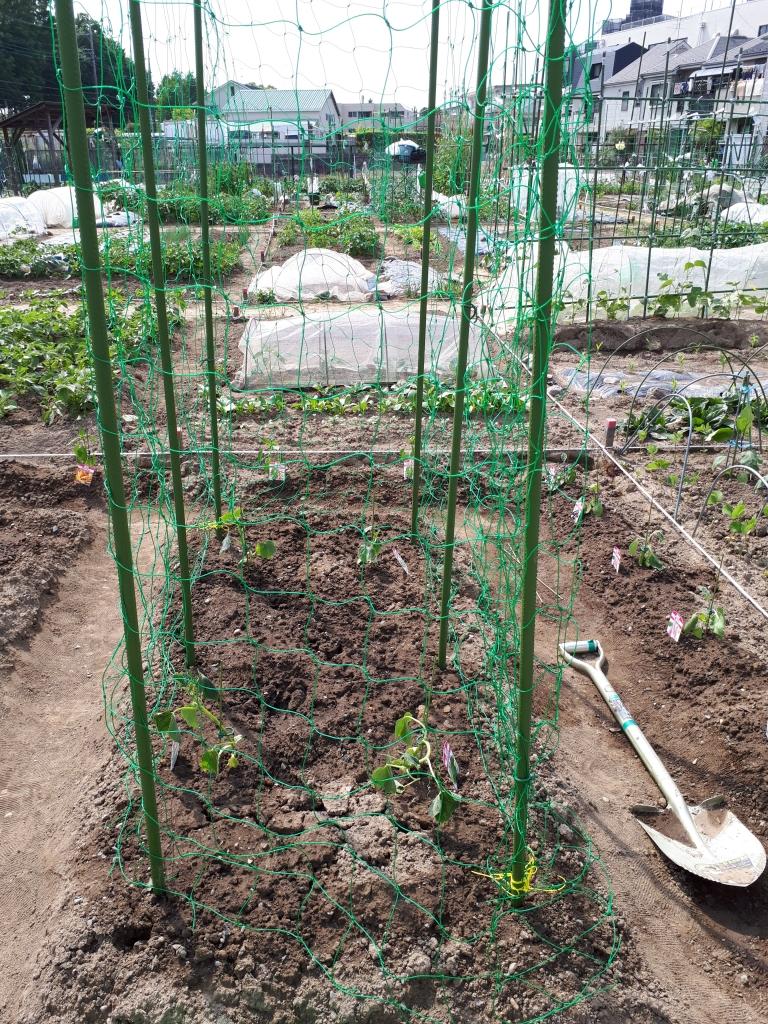 支柱 キュウリ キュウリ栽培がうまくいく支柱の立て方|支柱の高さや間隔、便利なアイテムも!|農業・ガーデニング・園芸・家庭菜園マガジン[AGRI PICK]