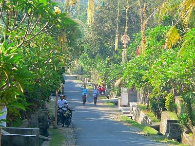 プリメリア咲く村の道