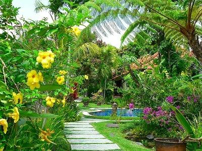 バリ島の花の写真ー中庭のアラマンダ