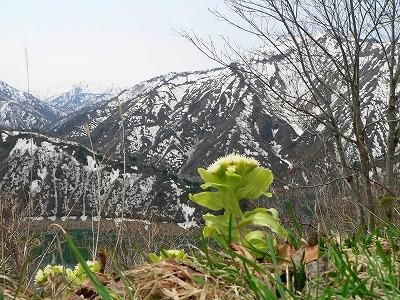 春浅き奥会津の山