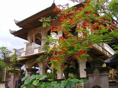 寺院のフランボヤン2