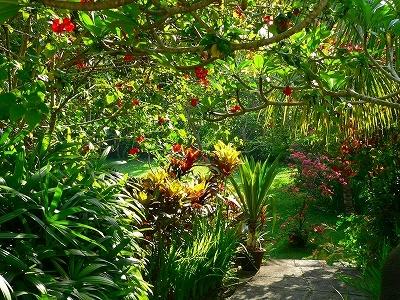 屋敷の中庭のハイビスカス