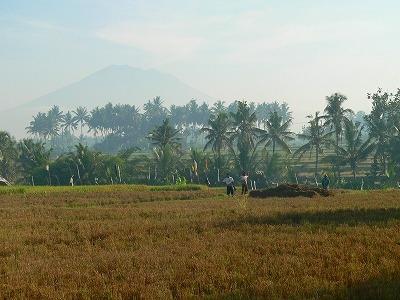 ヤシ林とアグン山