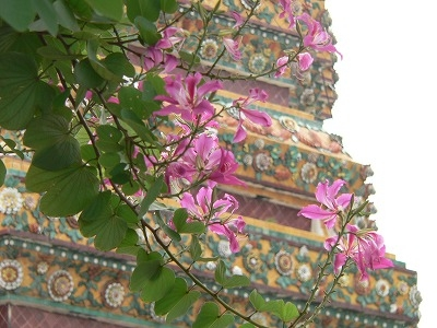 オーキッド タイ寺院