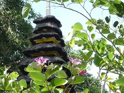 寺院の庭のオーキッド