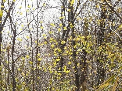 芽吹く雑木林