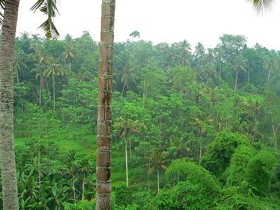 ココヤシの森