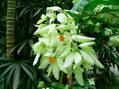 純白バージンツリー