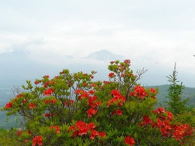 ツツジと南八ヶ岳