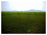 角田山と弥彦山