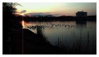 乙戸沼の渡り鳥
