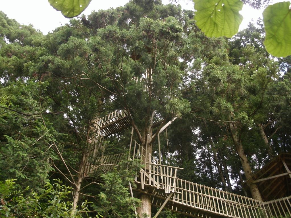 里道からわがツリーハウスを見る