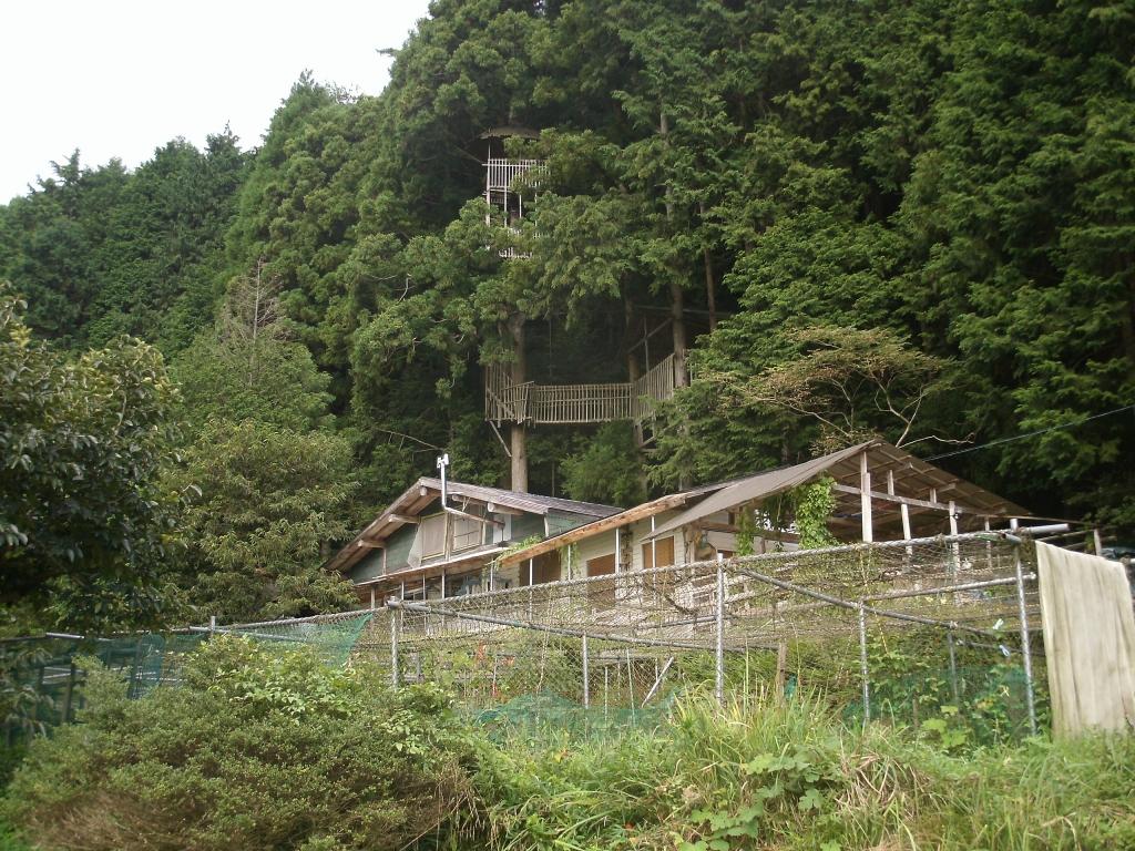 掘立小屋越しのツリーハウス