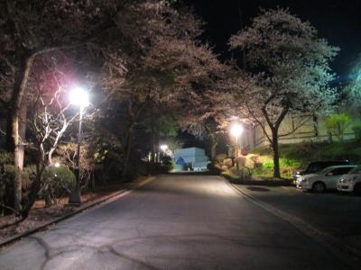 お帰りの際も桜のお見送り