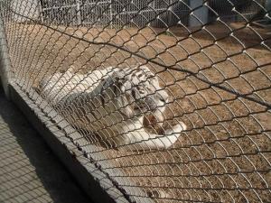 シンセン動物園