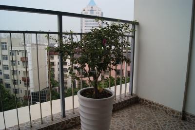 深セン 観葉植物