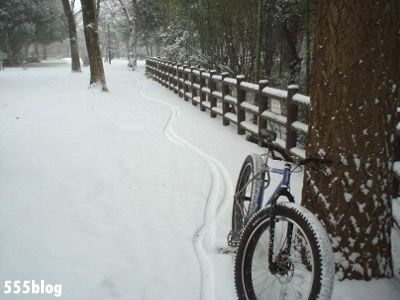 555nat ホロホロ日記 世田谷トレイル 2014年2月8日の新雪ライド(2)