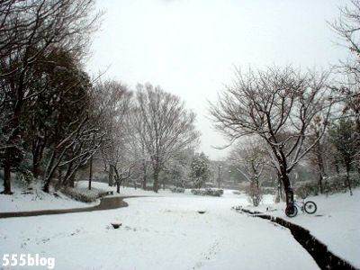 555nat ホロホロ日記 世田谷トレイル 2014年2月8日の新雪ライド(4)