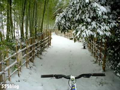 555nat ホロホロ日記 世田谷トレイル 2014年2月8日の新雪ライド(5)