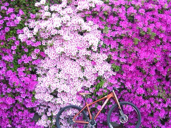 ホロホロ日記 555nat.com bike ride setagaya tokyo 2017.5.1 自転車とツツジ 世田谷 東京