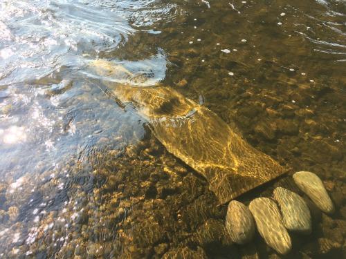 リネン布による多摩川の水の放射能汚染の調査 2019年1月17日 リネン 555blog 555nat ホロホロ日記