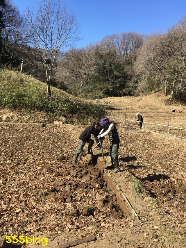 Now Tenki 農に学ぶ 谷戸田サポーター 米作り(2)クロ切り 555blog 555nat ホロホロ日記