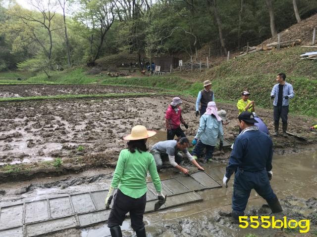 Now Tenki 農に学ぶ 谷戸田サポーター 米作り(3)苗床づくり 555blog 555nat ホロホロ日記