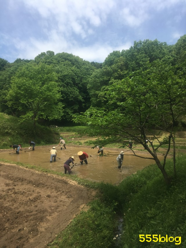 Now Tenki 農に学ぶ 谷戸田サポーター 米作り(4)荒代かき 555blog 555nat ホロホロ日記
