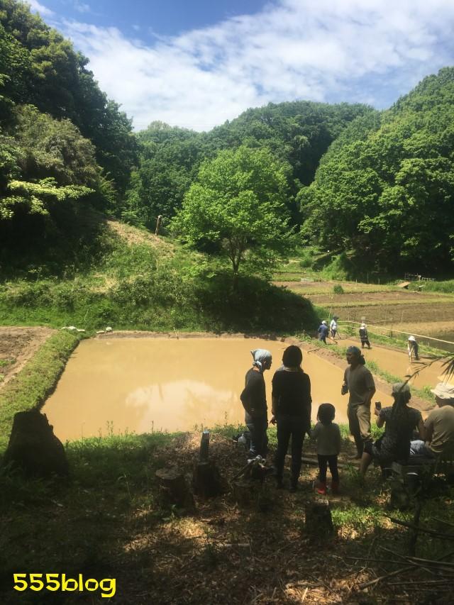 Now Tenki 農に学ぶ 谷戸田サポーター 米作り(5)荒代かき 555blog 555nat ホロホロ日記