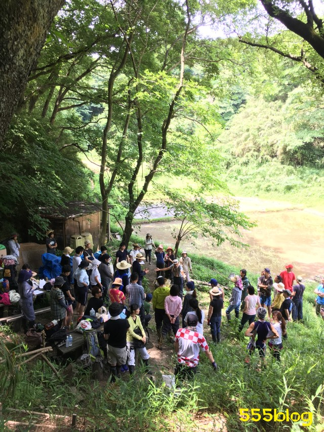 Now Tenki 農に学ぶ 谷戸田サポーター 米作り(6)田植え集まり 555blog 555nat ホロホロ日記