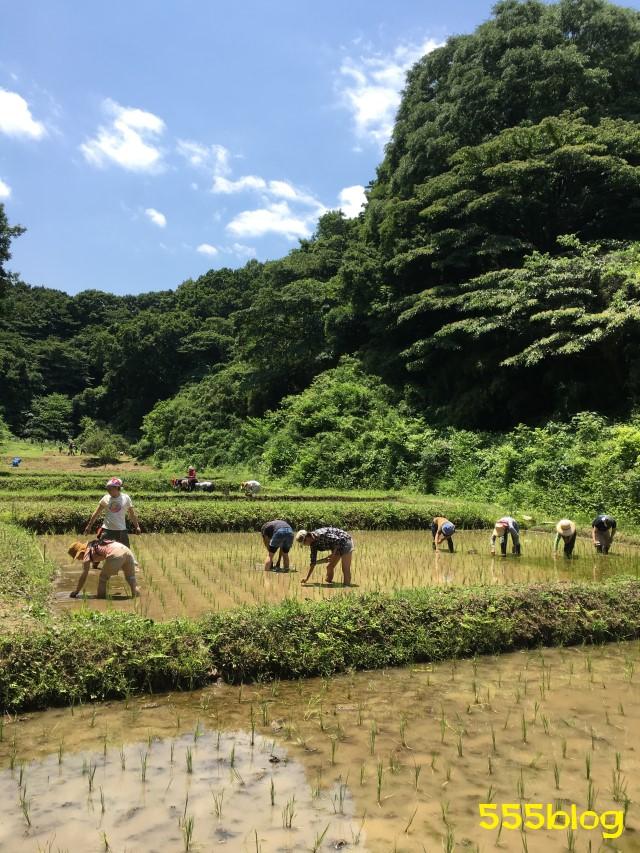 Now Tenki 農に学ぶ 谷戸田サポーター 米作り(8)除草1 555blog 555nat ホロホロ日記