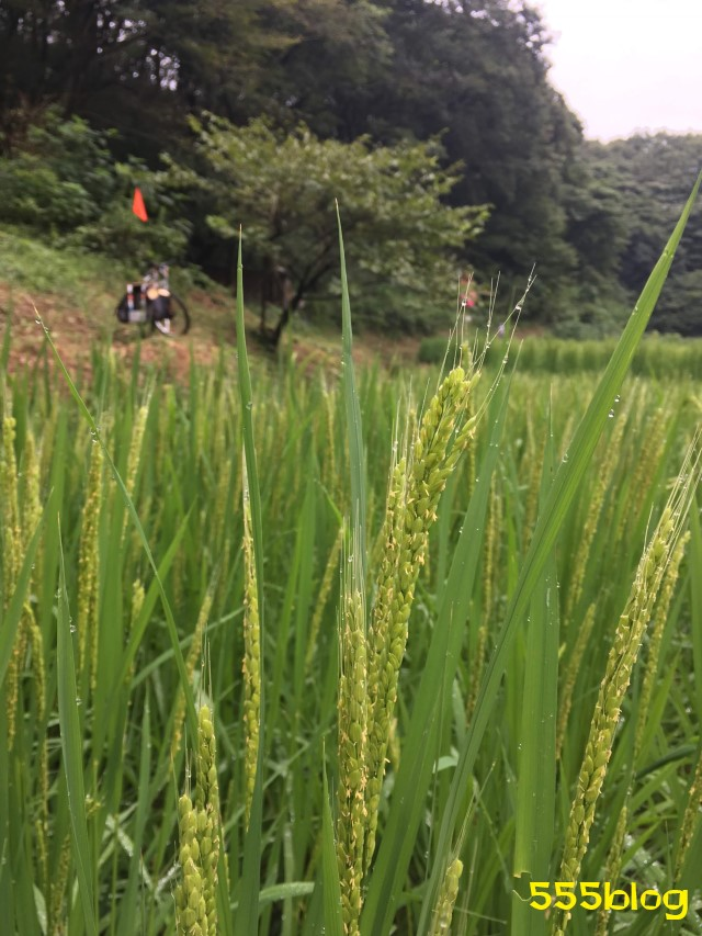 Now Tenki 農に学ぶ 谷戸田サポーター 米作り(11)お米 555blog 555nat ホロホロ日記